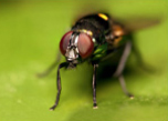 Fly insects control in Bahrain