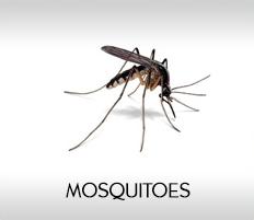 Pest Control Companies In Bahrain Pest Control Bahrain